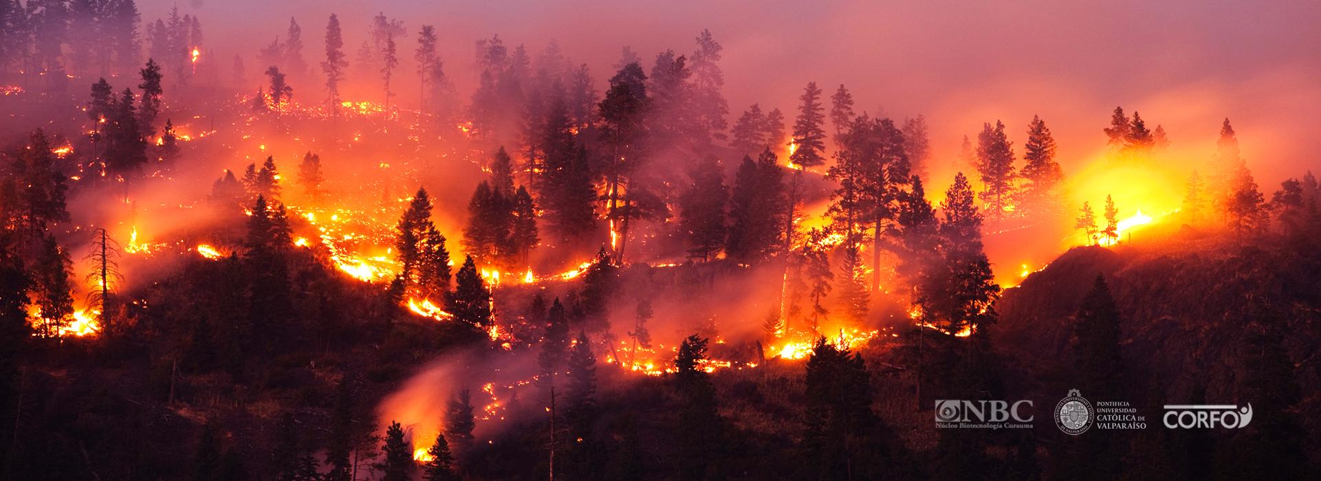 Sistema integral para la detección temprana de incendios forestales
